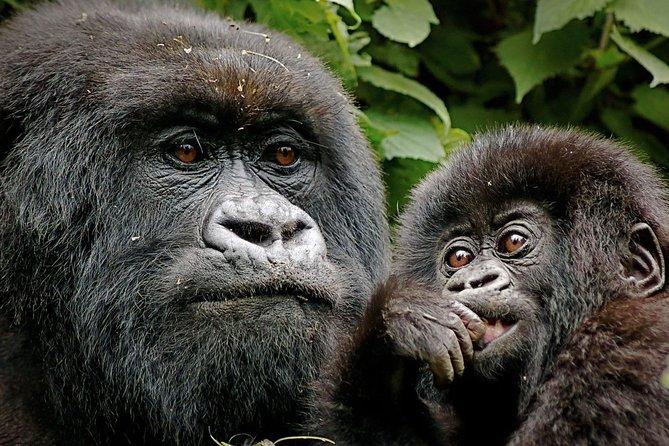 8 Days Gorilla and Wildlife Safari