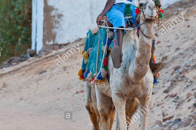 Nubian village and Camel ride photo 2