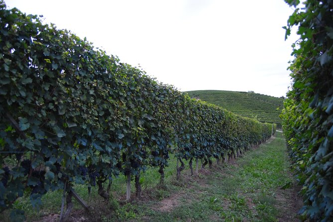 Barolo Wine Experience