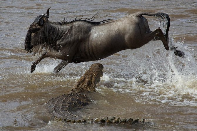 Witness the Great Wildebeest Migration in this 8 Days Wonderful Kenya Safari photo 8
