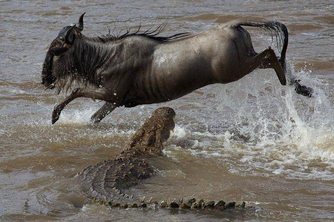 10 Days Kenya Paradise Safari (Amboseli | Aberdare | Samburu | Maasai Mara)