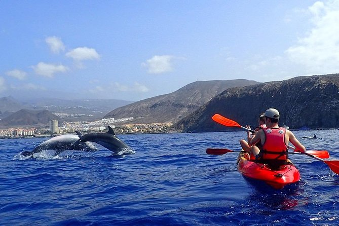 Kayaking, Snorkeling & Swimming With Wild Dolphins And Turtles!