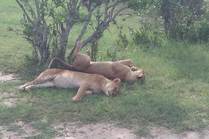 Half Day Nairobi National Park Safari in the City