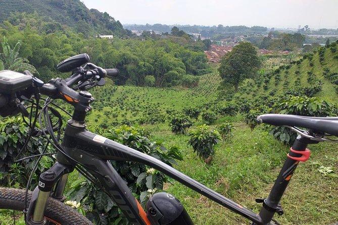 Bike rental in a coffee farm by one hour