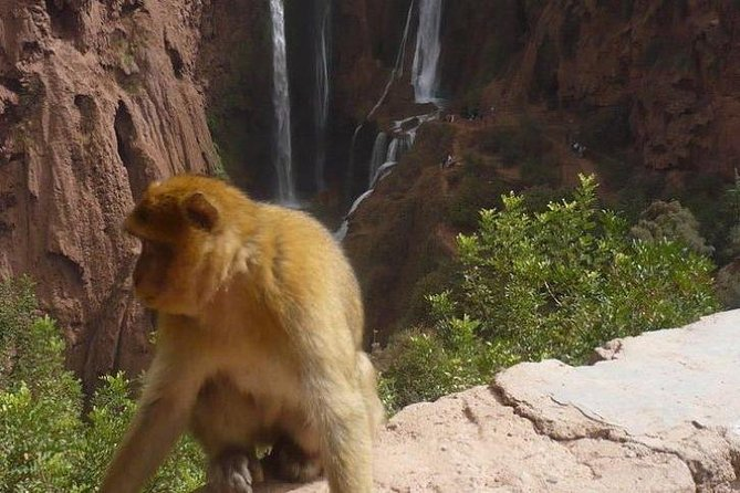 Ouzoud Waterfalls Private Day Trip from Marrakech photo 1