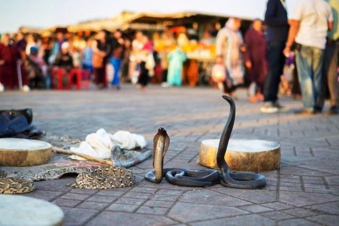 Highlights and Hidden Gems of Marrakesh in 5 hours photo 8