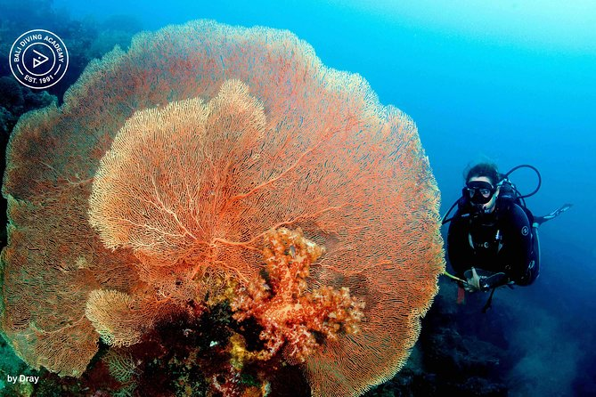 Discover Scuba Diving and dive in Menjangan Island Marine Park 2 dives