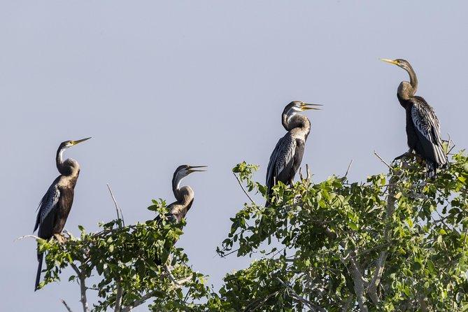 Bundala National Park Private Safari with Naturalist