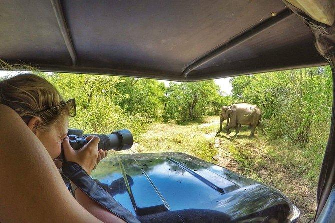 Udawalawe National Park 4 hours Safari From Ella
