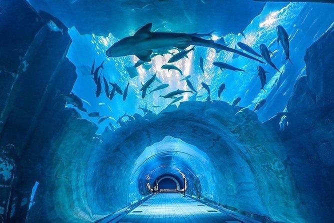Dubai Aquarium and Underwater Zoo Combo with Sharing Transfer
