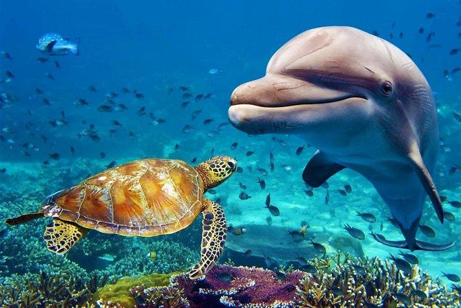 Dubai Aquarium and Underwater Zoo Combo Ticket