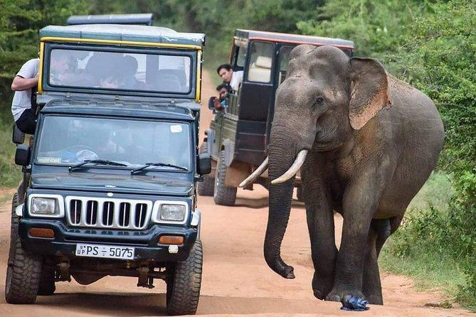 Best of Sri Lanka: Negombo, Sigiriya, Kandy, Ella, Yala, Mirissa, Galle, Colombo