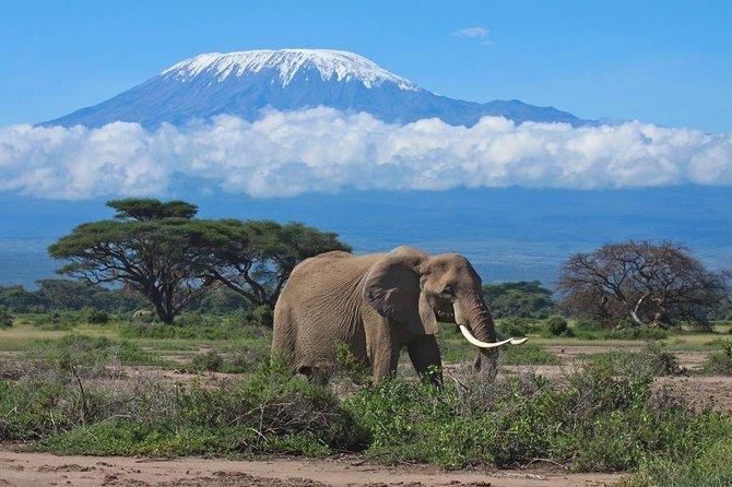 Kilimanjaro Climbing, Machame Route,7 Days.