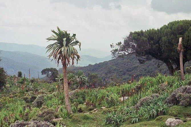 Bale Mountain 3 days tour