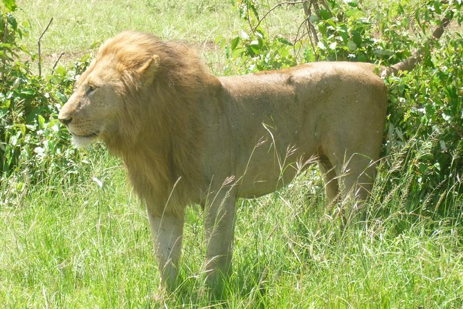 3 Days 2 Nights Serengeti and Ngorongoro Crater