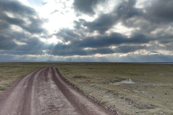 Wildebeest Migration Calving Season 7 Days