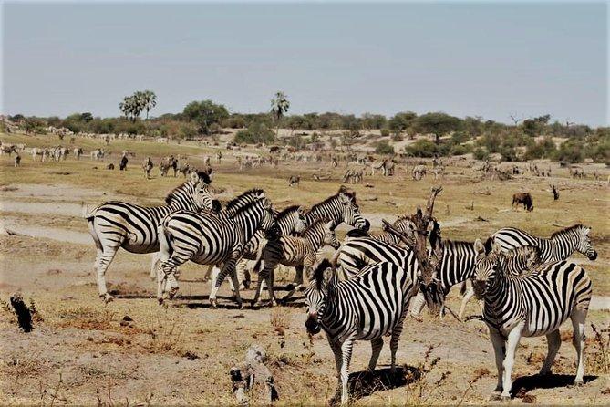 5-Day Mababe Safari