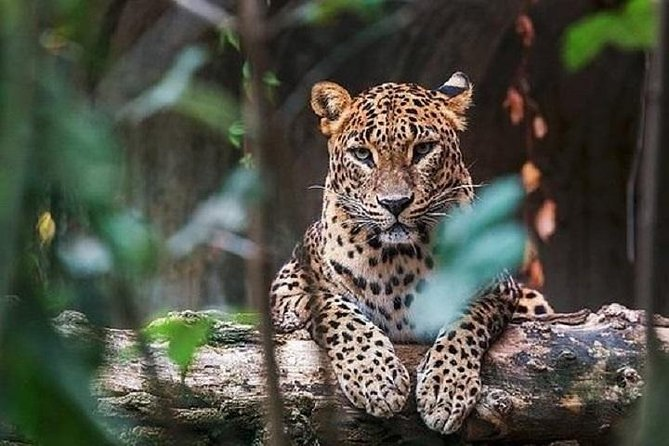 Yala National Park Safari : Private Tour From Galle