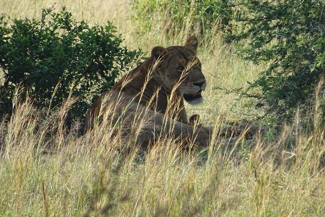 3 Days Murchison falls park Uganda photo 7