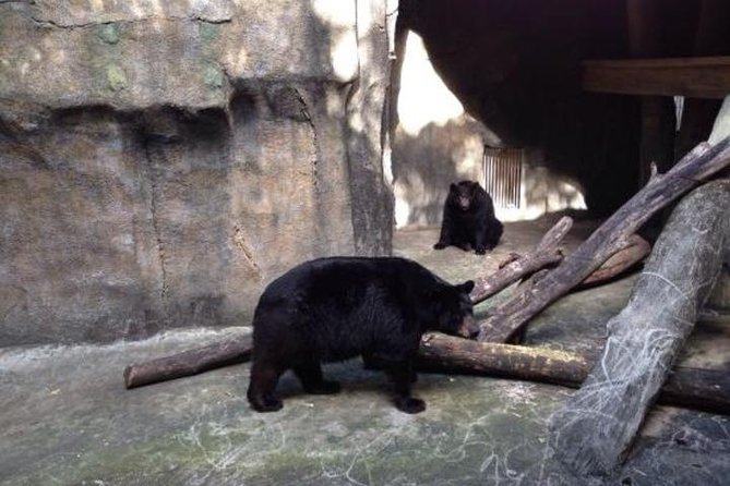 Wave to the resident Black Bears
