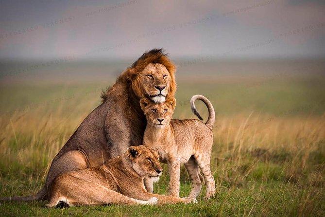 5 Days Masai Mara & Amboseli Wildlife Safari