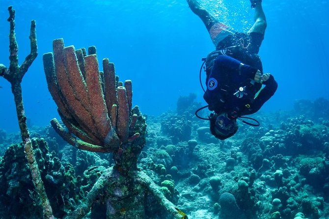 PADI Open Water Course with Scubaçao