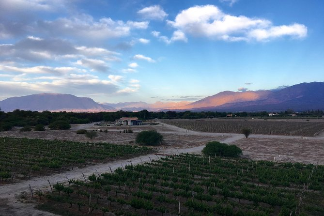 Exclusive day-long private tour of Cafayate vineyards