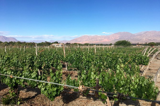 Exclusive day-long private tour of Cafayate vineyards photo 10