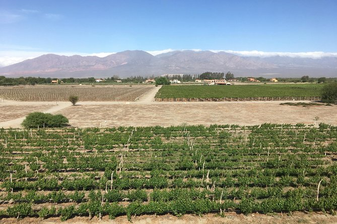 Exclusive day-long private tour of Cafayate vineyards photo 9