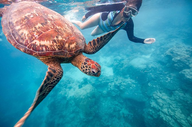 Turtle and Ray Snorkel Tour (Worldclass photography included)