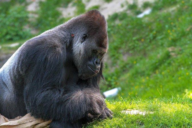 6 Days Gorilla trekking in Uganda