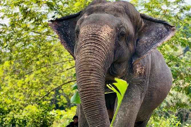 Phuket Elephant Park Ethical Tour with Lunch + Transfer photo 12