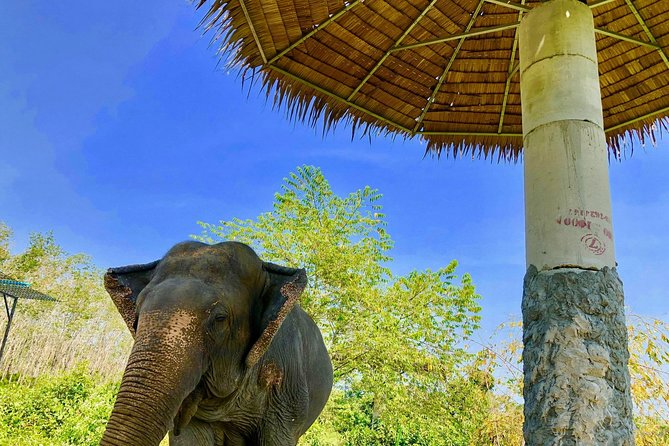 Phuket Elephant Park Ethical Tour with Lunch + Transfer photo 15
