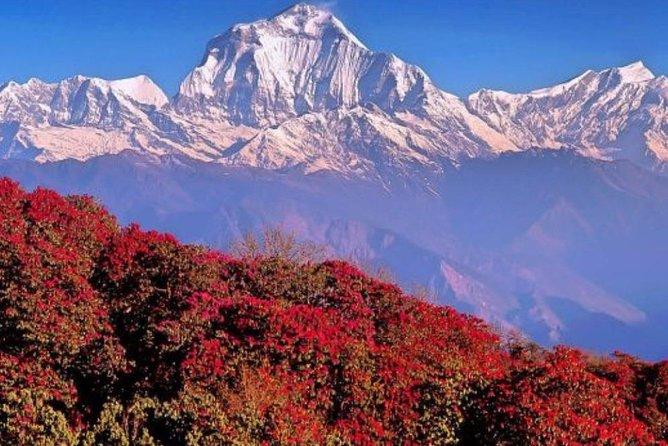 Ghorepani - Poonhill Trek -4 Days