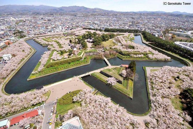 Cherry blossom viewing at Goryokaku with seasonal Japanese bento
