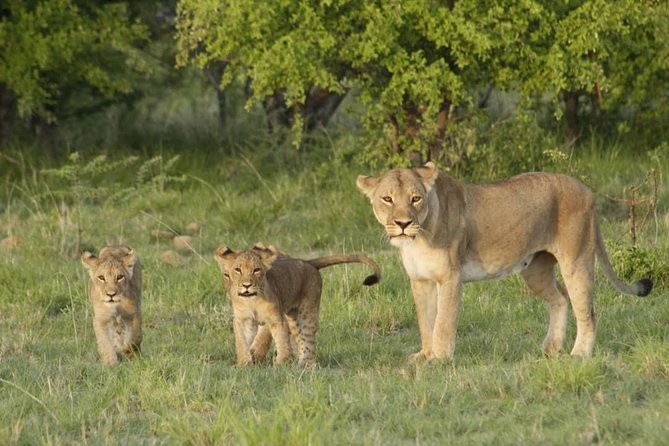 Botswana Chobe National Park Classic Safari -10 nights/11 days