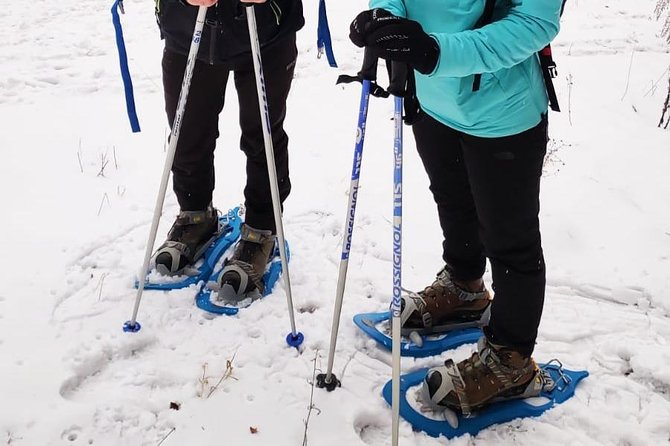 SnowShoe Walking Tour in Poiana Brasov photo 2