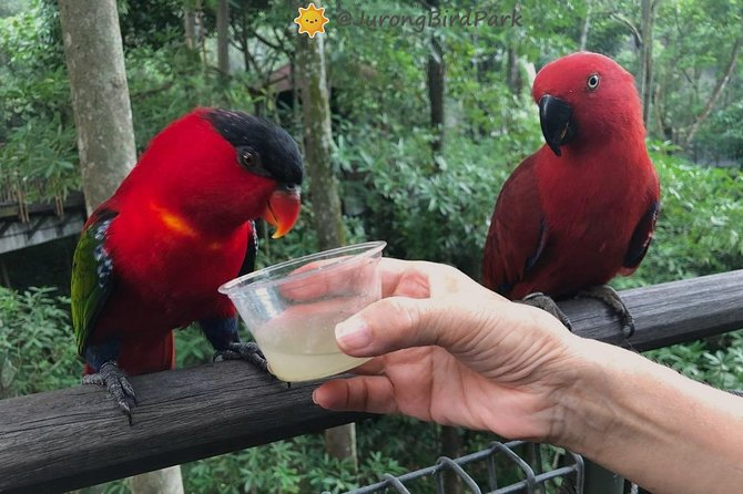 Dine with Parrots photo 7