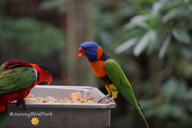 Dine with Parrots photo 8