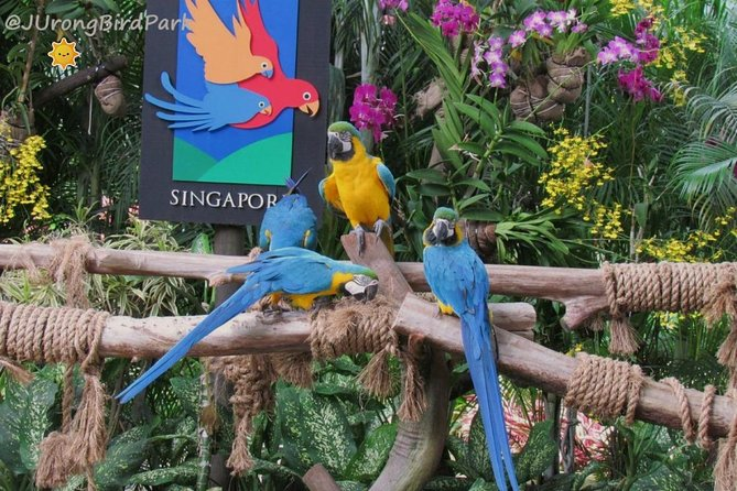 Dine with Parrots photo 2