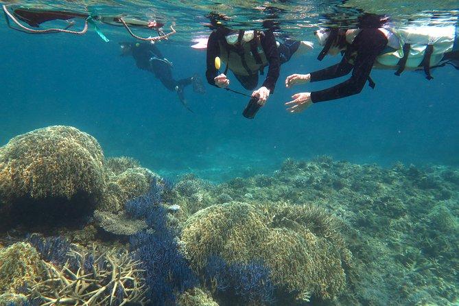 Snorkeling tour from Tokashiki Island