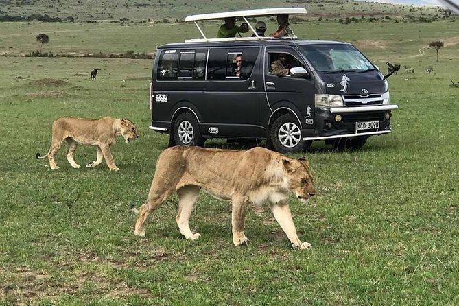 6 Days Unforgettable Safari in Masai Mara, Nakuru, and Amboseli, Kenya