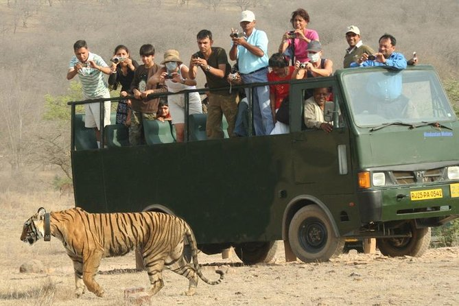 Jaipur Ranthambore Tour photo 4
