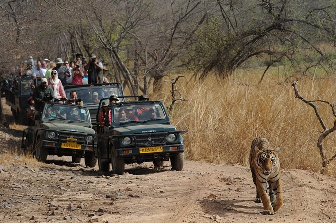 Jaipur Ranthambore Tour photo 2