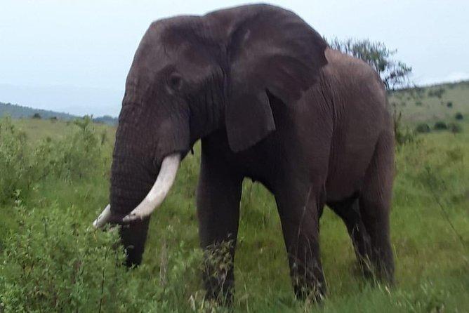 Day Trip excursion Nairobi.
