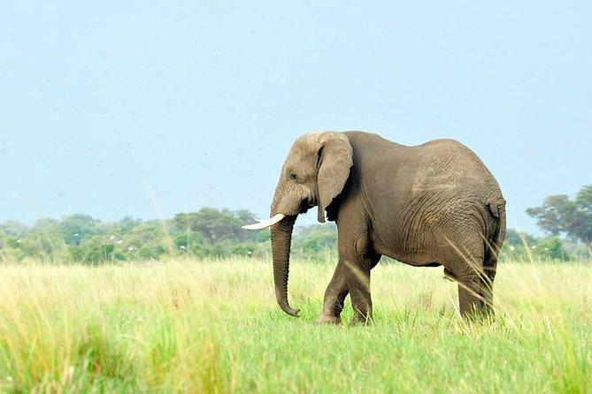5 Days Great Migration and Budget Safari in Tanzania