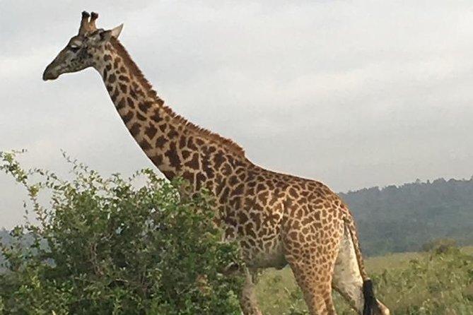 3 Days Nairobi - Naivasha - Amboseli - Nairobi