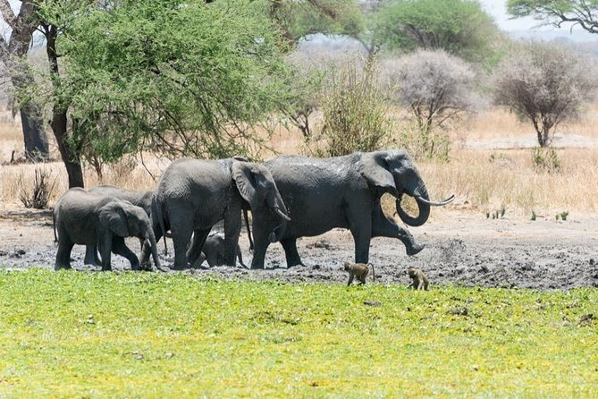 4 days – Tarangire, Serengeti, Ngorongoro Crater