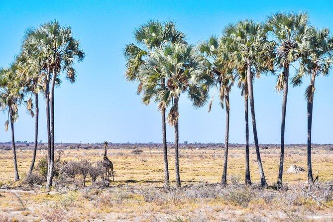 Botswana Desert Camping tour– Kalahari - Nxai Pan Safari (9 nights/ 10 Days)