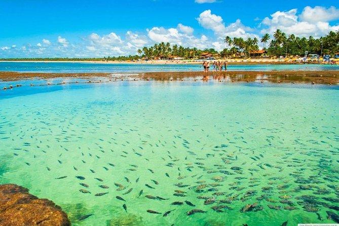 PORTO DE GALINHAS: Excursion to Praia dos Carneiros!